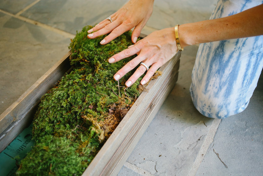 DIY Succulent Box on Fashionable Hostess - Step 2 - fill with moss