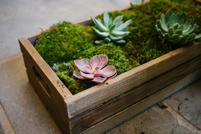DIY Succulent Box on Fashionable Hostess - Step 3 - succulents