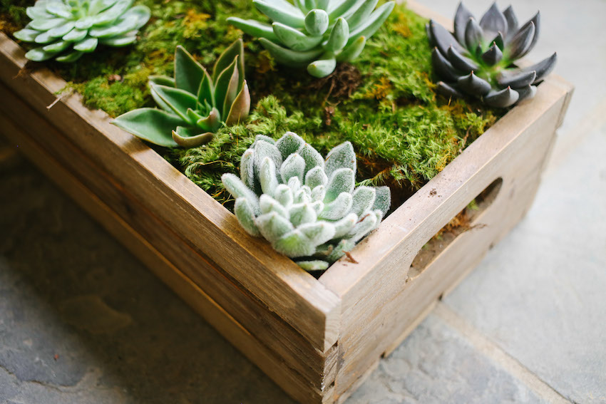 How to create a Succulent Box on Fashionable Hostess