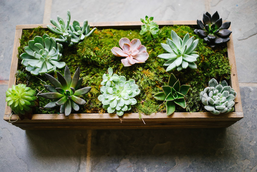 Using succulents on your tabletop