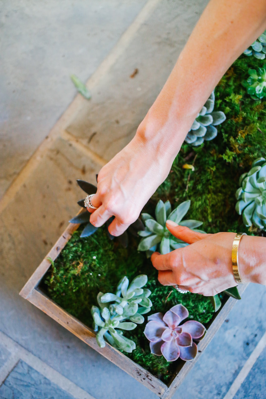 DIY Succulent Box on Fashionable Hostess - Placing your succulents